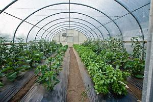 Cultivos en Invernaderos