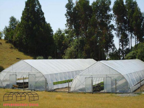 invernaderos multi - túnel